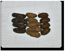 Chinchilla Droppings & Greenwood Chinchillas islam-shia.org